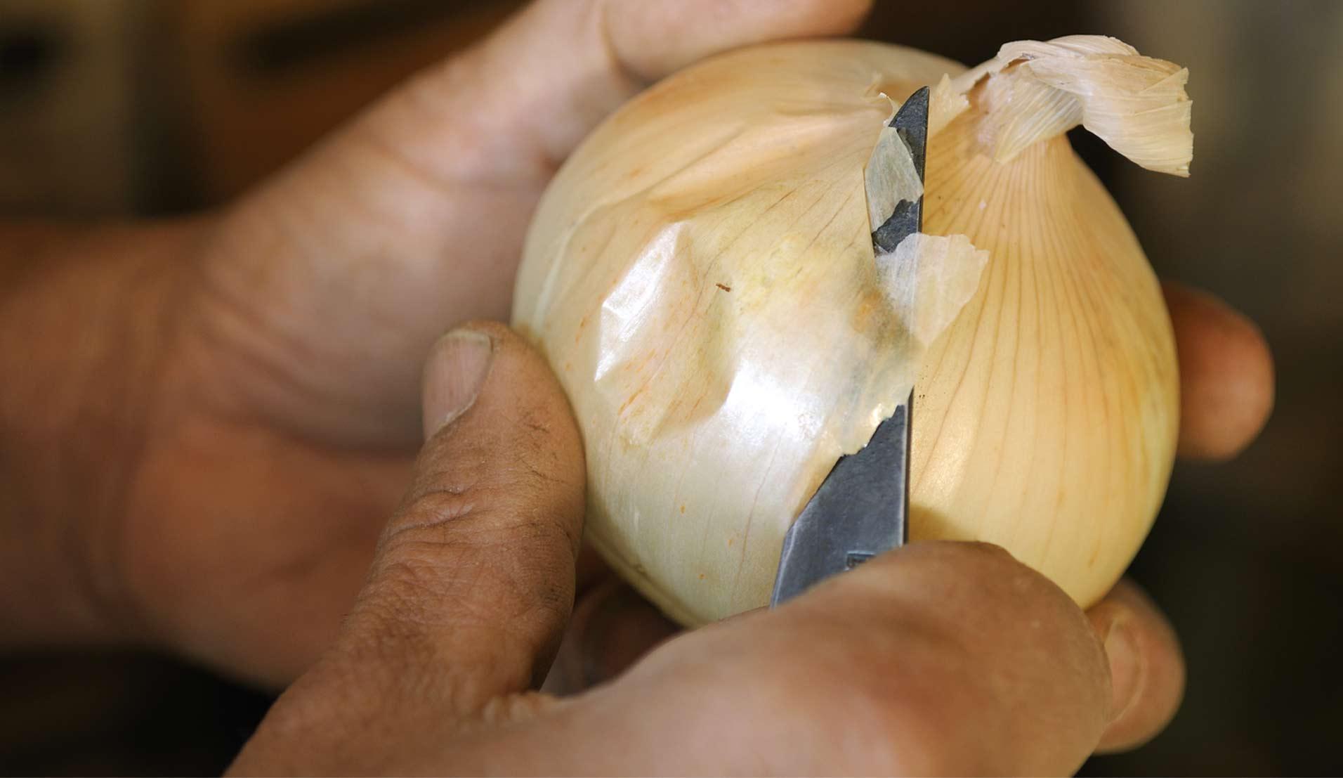 L'oignon doux des Cévennes, un oignon pas comme les autres !