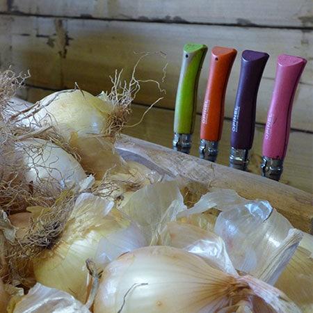 Oignons secs avant leur préparation