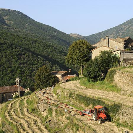 Chantier de récolte sur les parcelles en terrasses