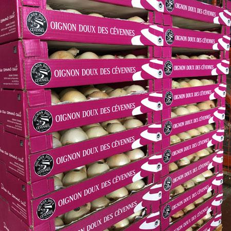 Oignons doux des Cévennes: Plateau lité pour oignons stickés, catégorie premium (env. 4,5kg)