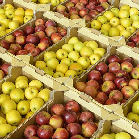 Pommes rouges et jaunes lors de la Foire de la pomme et de l'oignon du Vigan