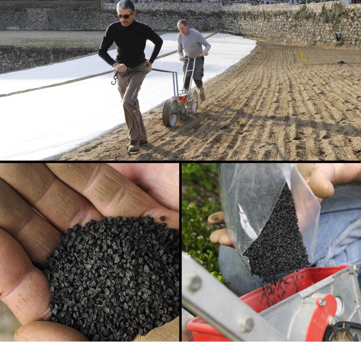 Premiers semis d'oignons doux des Cévennes en 2018…
